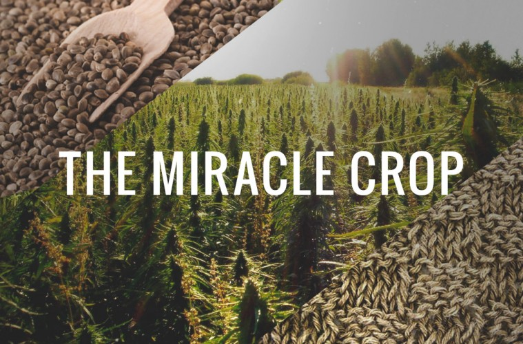 hemp-the-miracle-crop