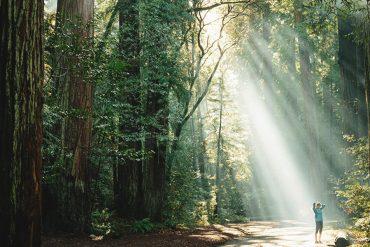 Science_behind_nature_healing_powers
