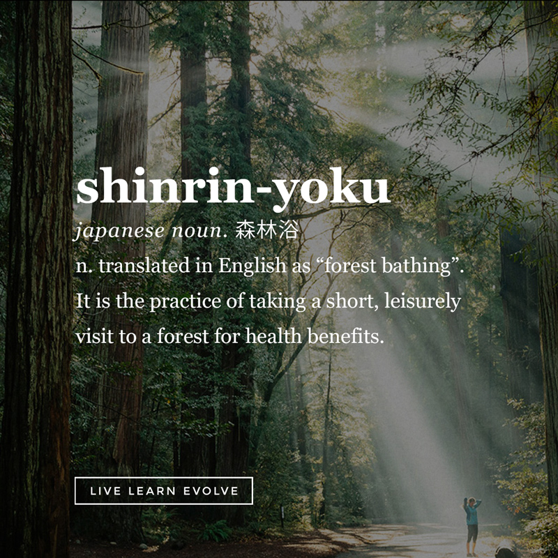 shinrin_yoku_forest_bathing