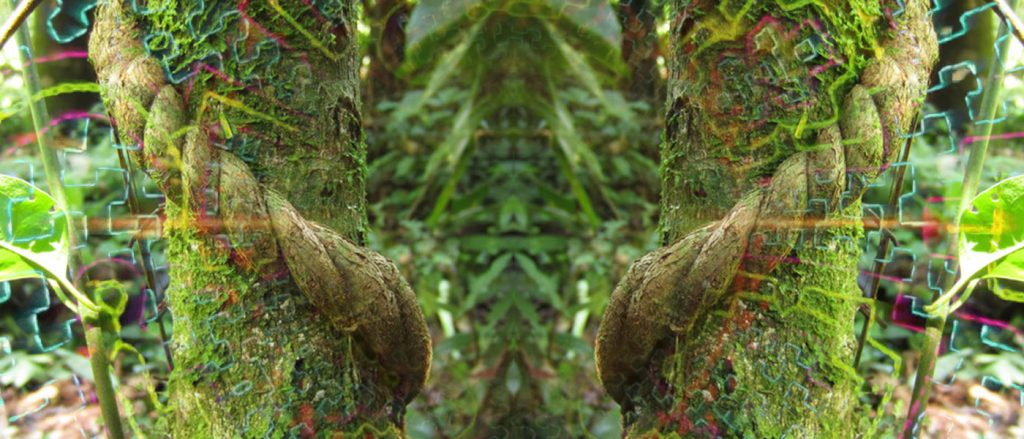 ayahuasca-integration-help-coaching