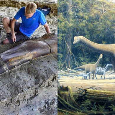 ginormous_dinosaur_bone_discovered_france