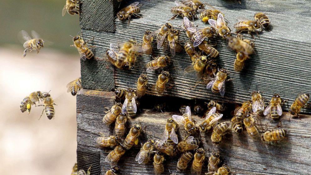 honey-bees-mushrooms-virus-paul-stamets