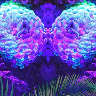 ayahausca_neuroscience